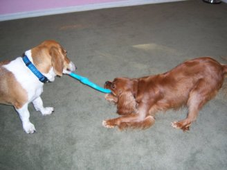 Molly (left) and Charlie (right) play with a toy at daycare.